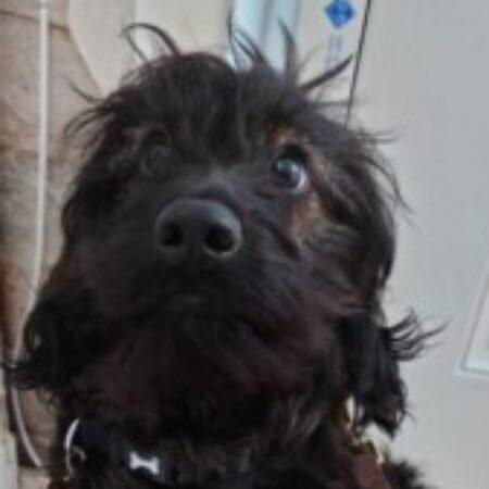 Profile picture of Oreo Thomas